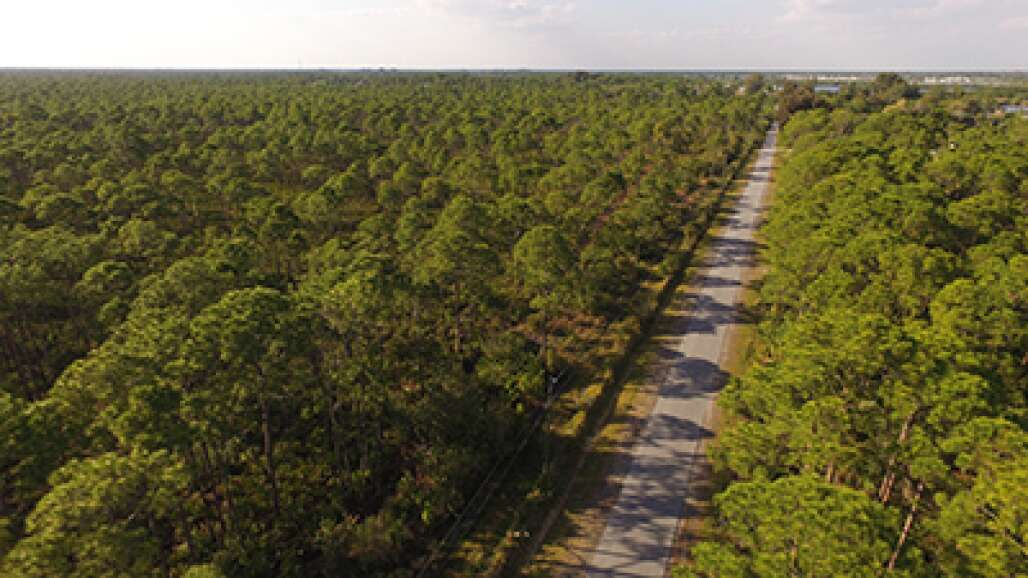 Wilderness awaits visitors in the 8,593-acre Myakka State Forest that offers a spot for a picnic, walk, horseback riding, canoeing, fishing or off-road cycling on the Windows to the Gulf Waters Scenic Highway.