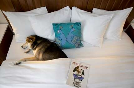 In Florida, there is always somewhere to stay with your four-legged friend — big or small.