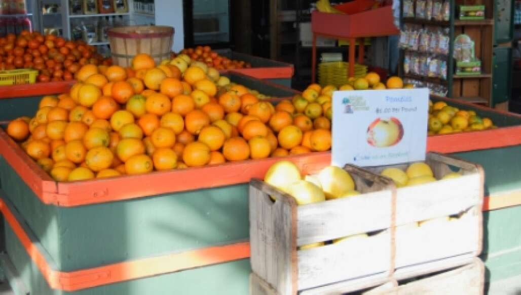 You can find several types of citrus for sale at Ridge Island Groves