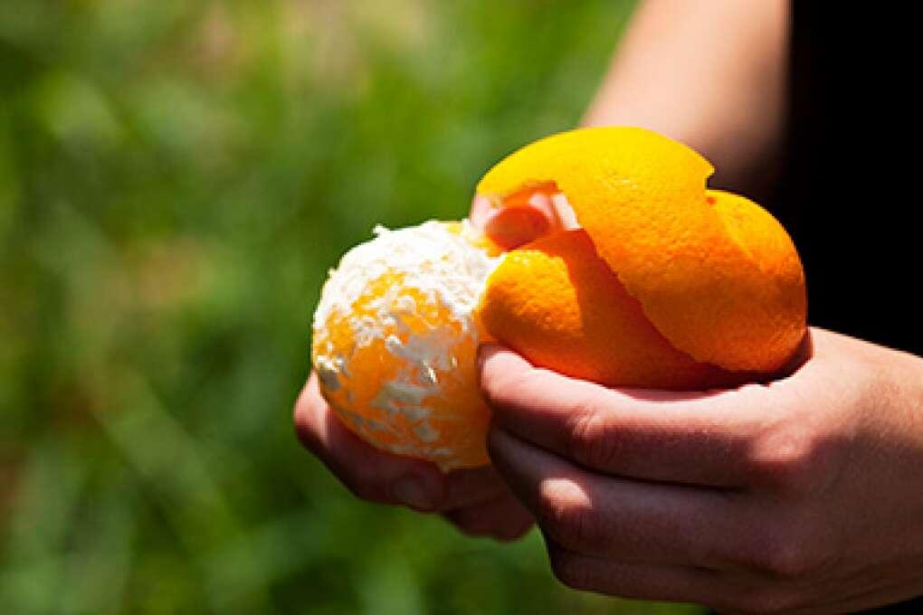 florida orange facts