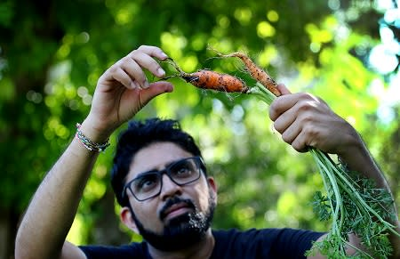 A man cleaning freshly collected carrots from the farm in Southeast Florida