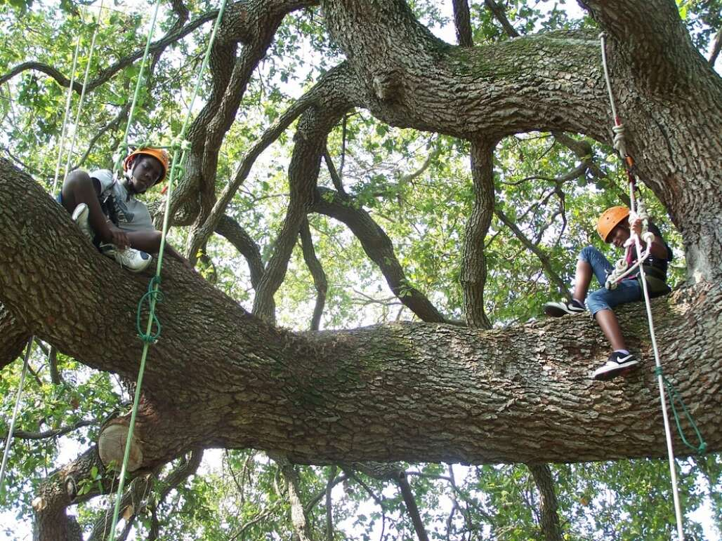 The nonprofit Pathfinder Outdoor Education, based in St. Petersburg, offers Open Tree Climb sessions with ropes and harnesses for ages 6 and up.