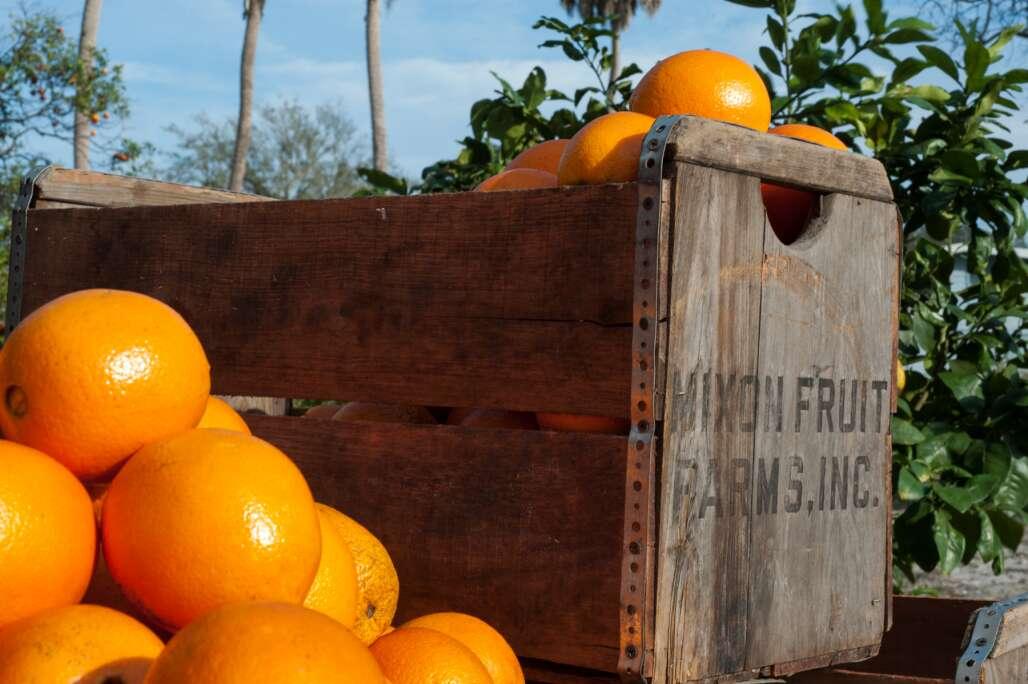 Mixon Fruit Farms