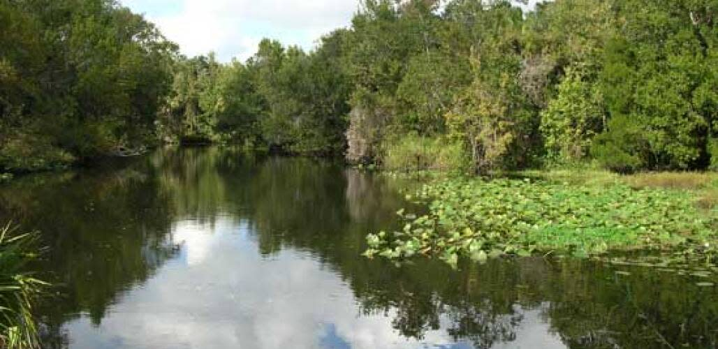 The Little Manatee River. As a state park, this will be preserved for future generations.