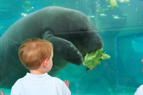 See manatees and other marine life, up close, at Mote Marine Aquarium.