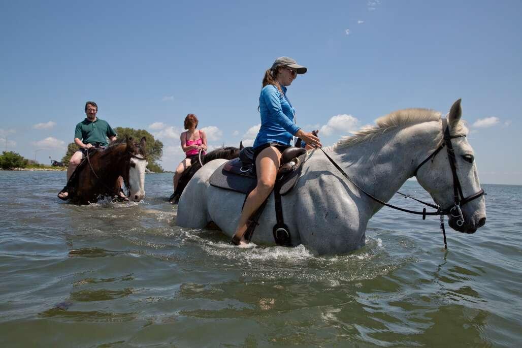A horse and rider swim in Palma Sola Bay by Bradenton.