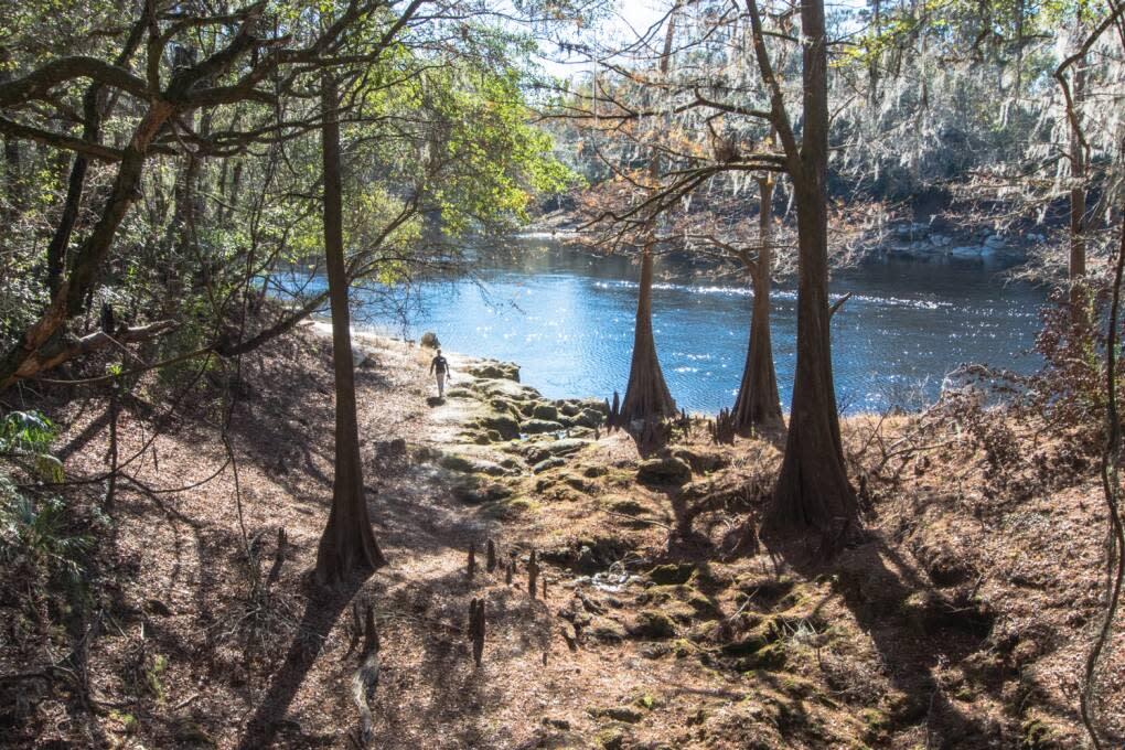 El festival anual de remo por el río Suwannee se lleva a cabo en dos bellos ríos del norte de la Florida, el Suwanee y el Withlacoochee.