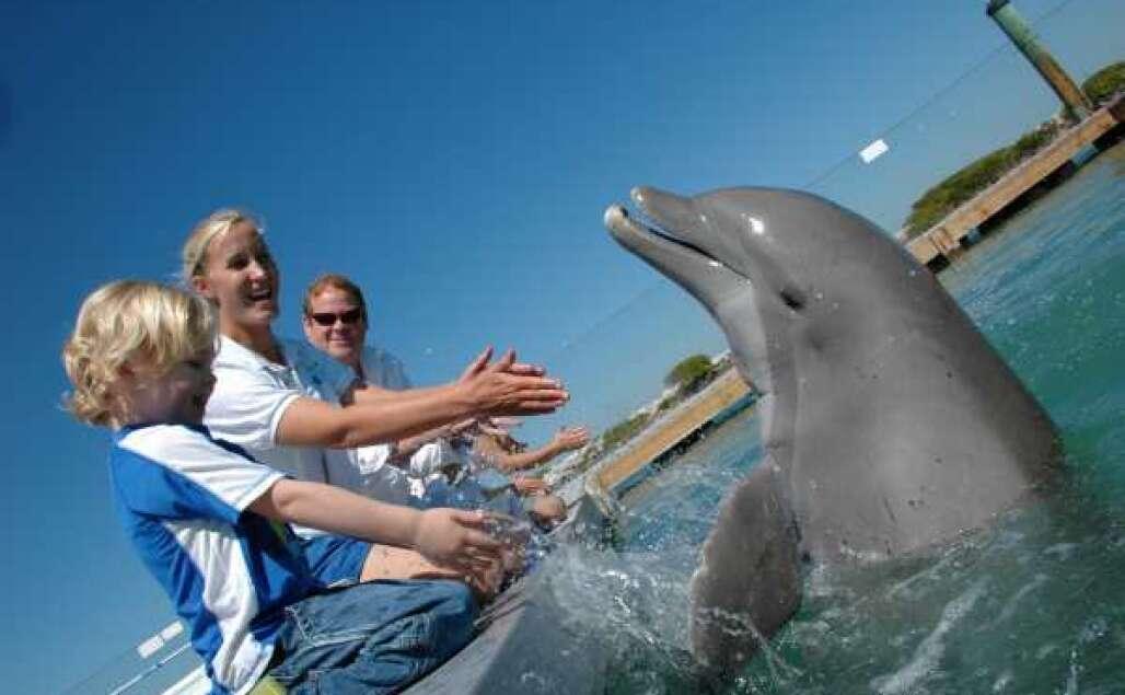 Encontro de golfinhos no Hawks Cay Resort