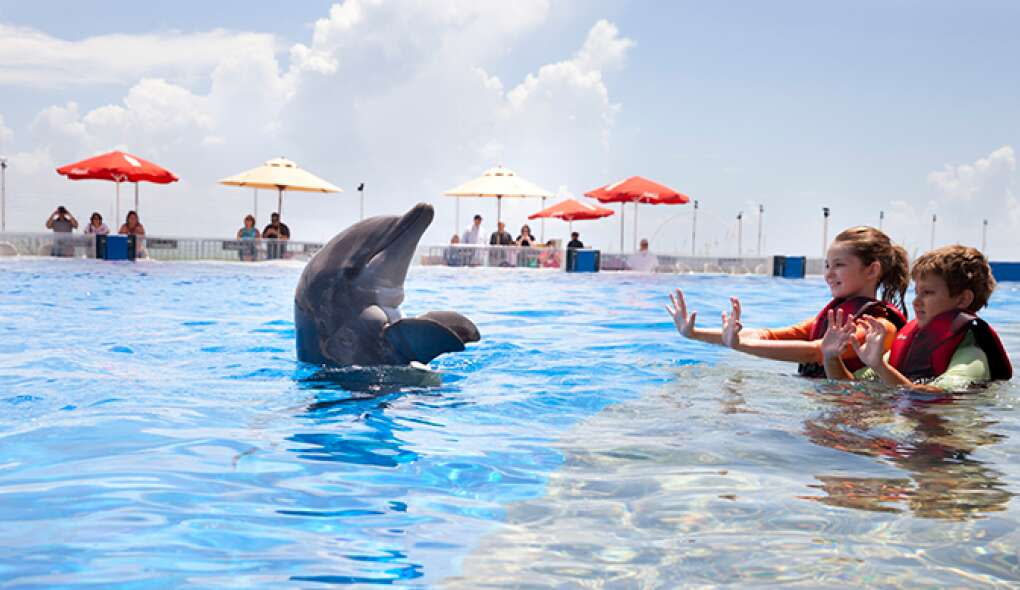 Marineland has a range of options for interacting with the dolphins, including getting in the 1-million-gallon tank with the mammals.