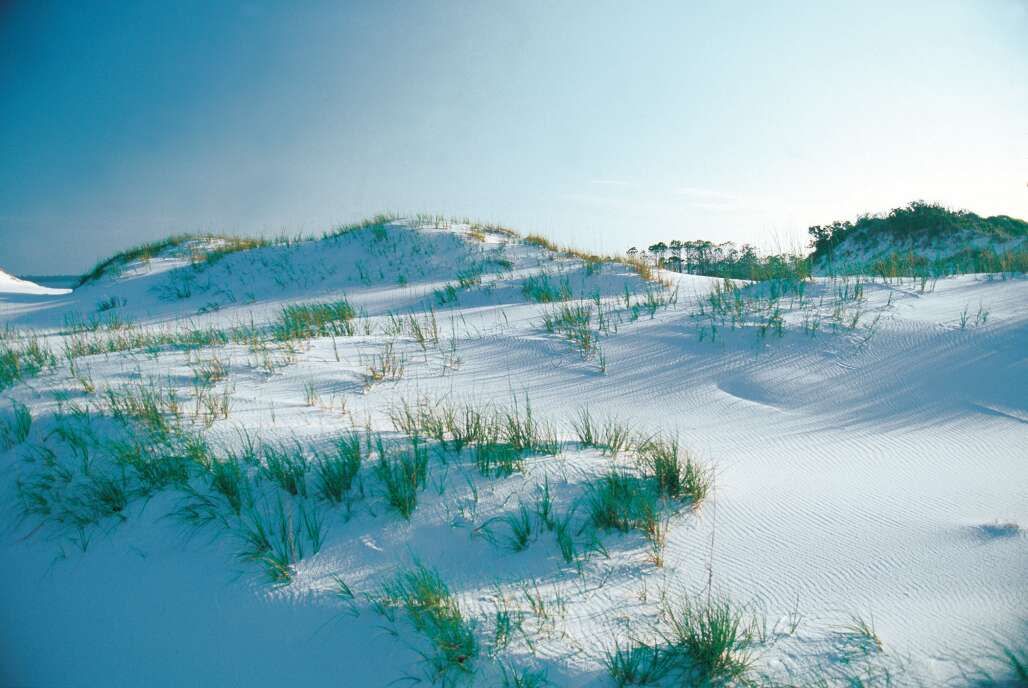 Navarre dunes