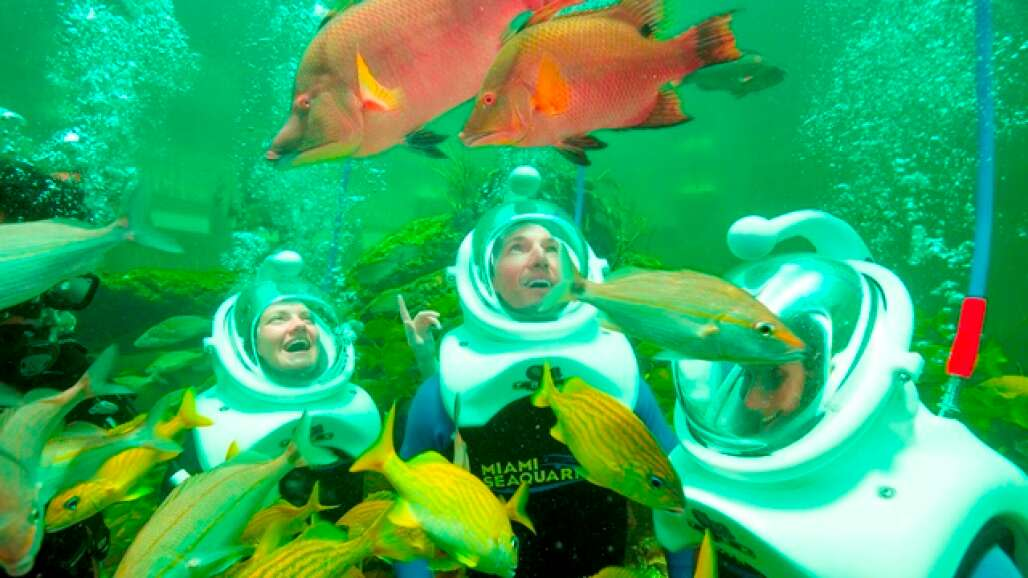 The Summer Savings Pass offers unlimited admission to four great SoFla venues: Lion Country in West Palm Beach, Miami Seaquarium, the Museum of Science and Discovery in Fort Lauderdale and Zoo Miami.