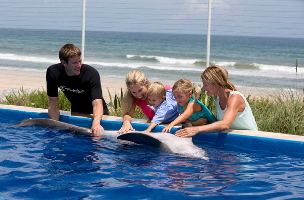 Experience fun at the Marineland Dolphin Encounter