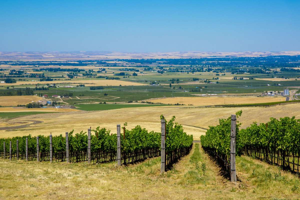 A lovely town in its own right, with parks and the Whitman College campus, Walla Walla has become a wine lover's destination of North American renown. The author can remember days when the highlights were Woodward Canyon and L'Ecole 41 - in an old school - in Lowden just west of the city. No more. In order to imbibe, taking a wine tour is strongly recommended. So is having a checkbook at the ready. In 2006, then-Illinois Sen. Barack Obama came out for a forum at Garfield High. Host Tom Douglas gave him a bottle of Woodward Canyon Cab to take home. The Obamas would later serve Walla Walla wine at White House state dinners.