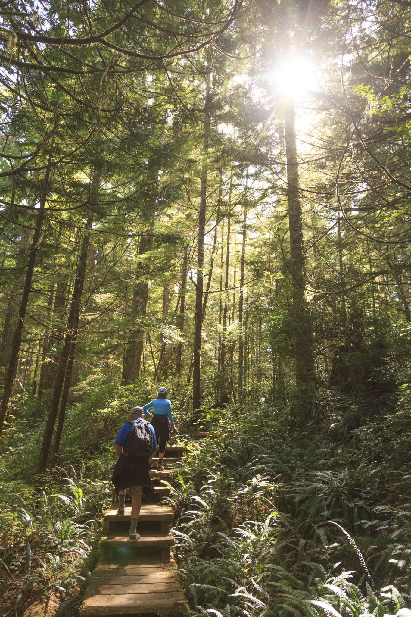 The temperate rain forests of North America have disappeared beneath loggers' chainsaws, and the Trump Administration wants more cutting in Alaska's Tongass National Forest. Thankfully, a president in a wheelchair - Franklin D. Roosevelt - created a national park that saved cathedral forests in our state. The Hoh is a place to savor the forest primeval, either through nature walks or on the lengthy trail that takes climbers to Mount Olympus. Watch Roosevelt Elk appear out of and disappear into the mist. Experience the silence of the place and appreciate the fact that you own this land.