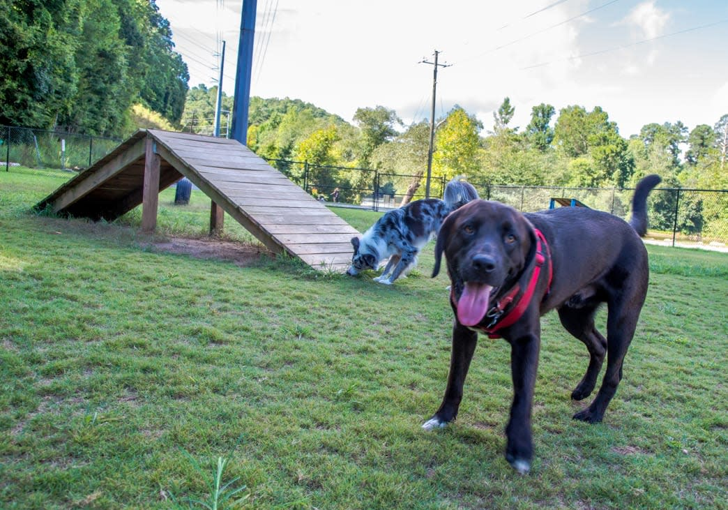 Two Dogs On The Grass Near A Ramp At A Sandy Springs Dog Park