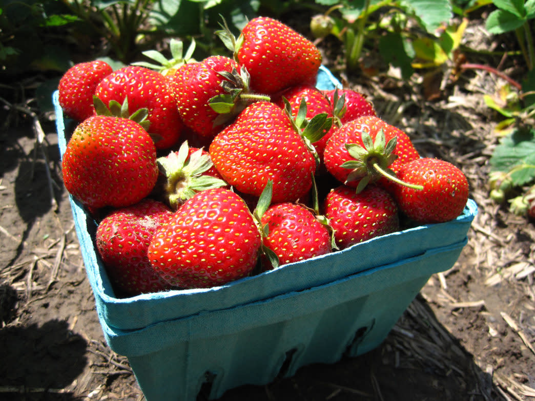 At Knoxville's Fruit and Berry Patch, pick your favorite savory fruits throughout the warmer months, depending on what's in season.