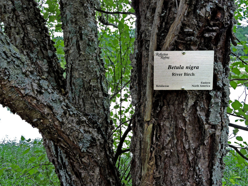 More than 140 species of trees are identified and labeled in the arboretum.