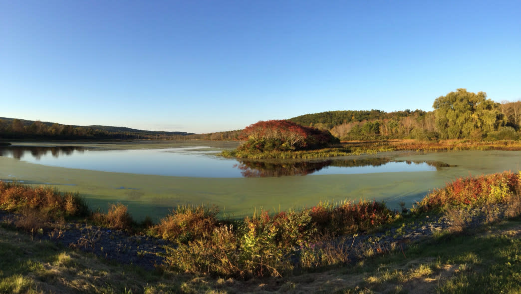 Go for a peaceful hike around the lake in Birdseye Hollow State Forest.