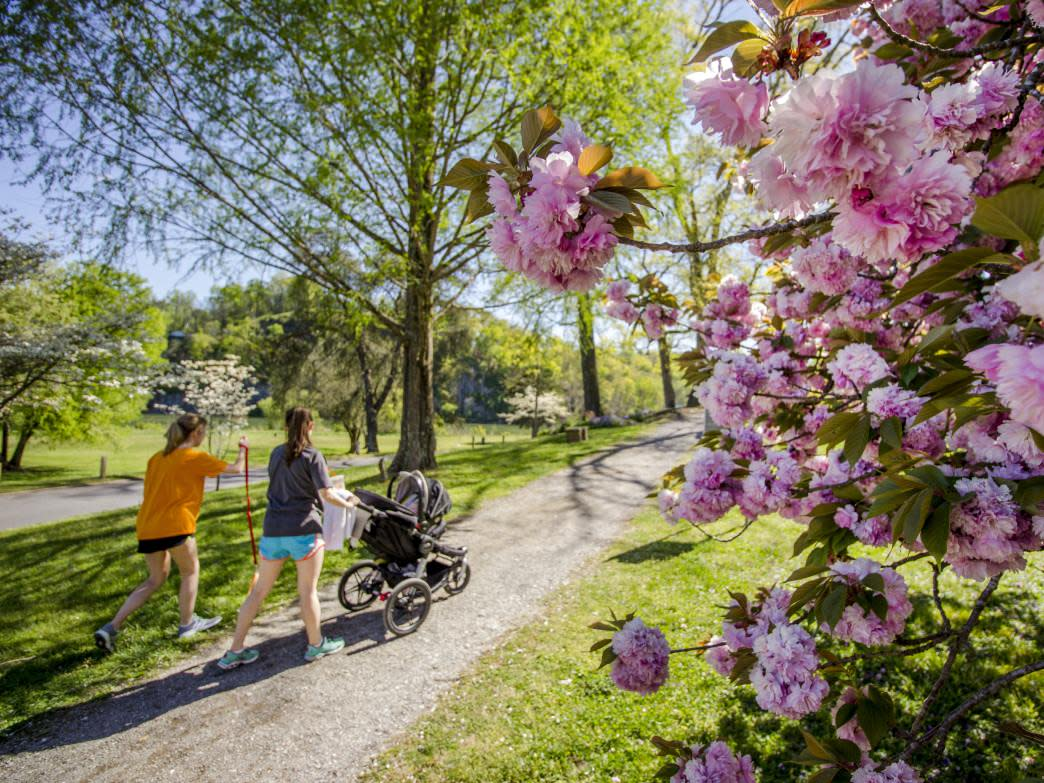 Sequoyah Hills is one of the many greenways in the Knoxville urban trail system around town.