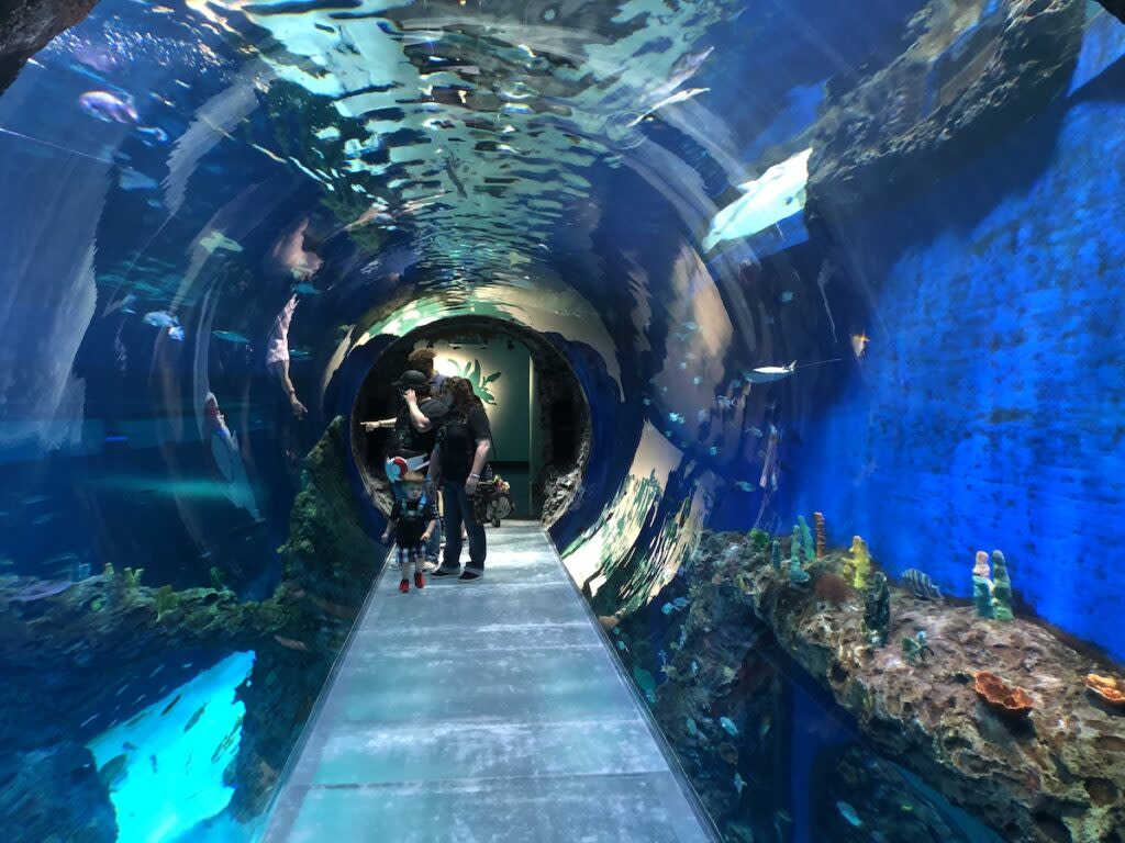 Tunnel at the Mississippi Aquarium located in Gulfport, Mississippi.