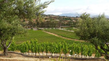 Cougar Vineyard & Winery, Temecula, CA
