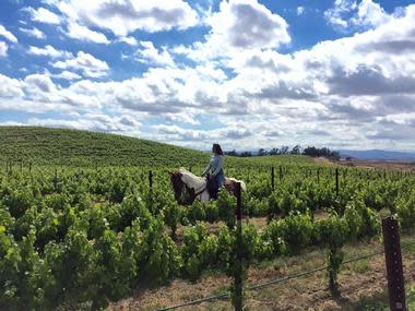 Wine Country Trails by Horseback, Temecula, CA