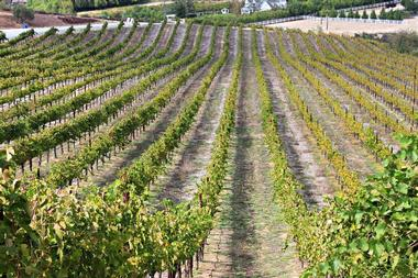 Vindemia Estate Winery