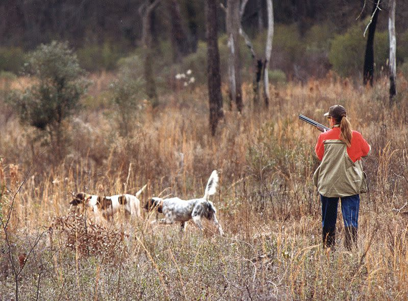 Wynfield Plantation is located on 2,000 acres of prime quail hunting habitat outside of Albany in southwest Georgia.