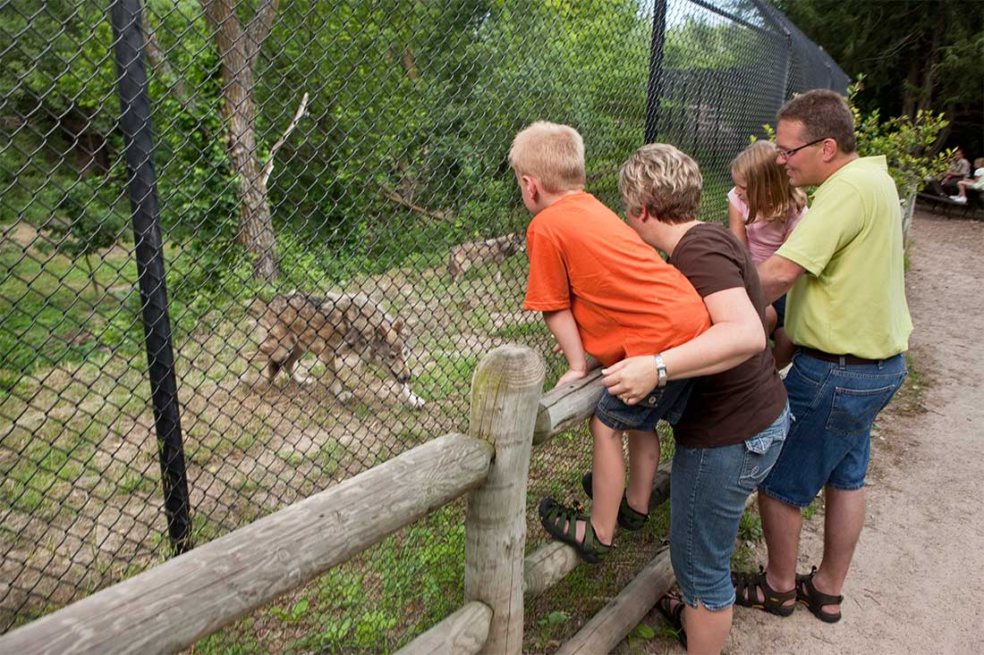 A family stands at a chain link fence, looking through the fence at a gray wolf standing on the other side, at the Lee G. Simmons Conservation Park & Wildlife Safari near Omaha, Nebraska