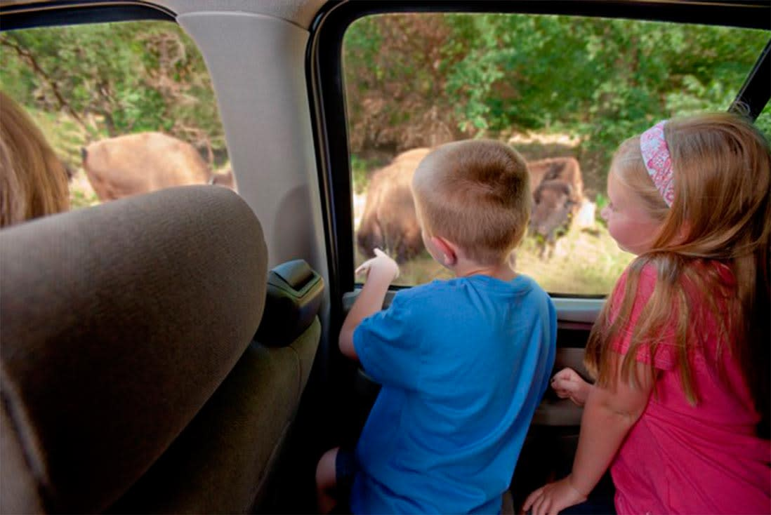 Two kids in the backseat of their car point at a herd of bison at the Lee G. Simmons Conservation Park & Wildlife Safari near Omaha, Nebraska