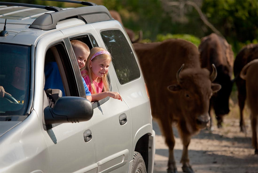 Two kids look out a rolled-down car window at the Lee G. Simmons Conservation Park & Wildlife Safari near Omaha, Nebraska