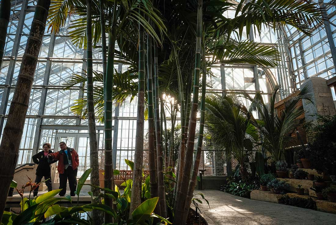 A couple looks at tall palm trees in the Marjorie K. Daugherty Conservatory in Omaha, Nebraska