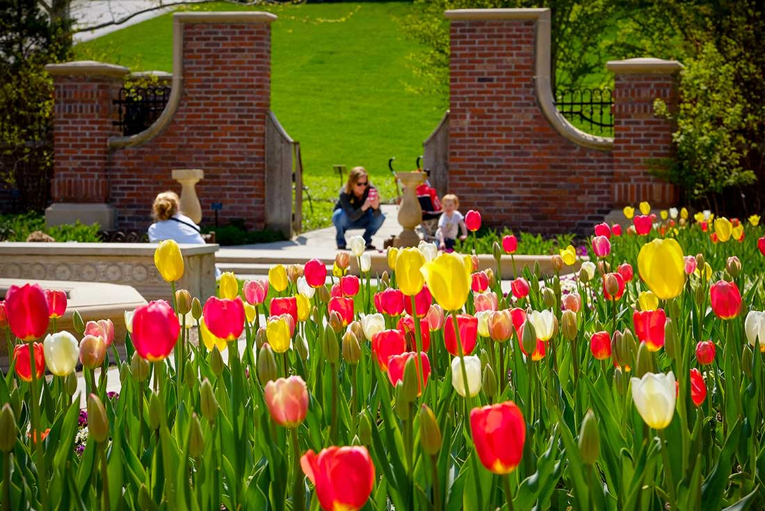 A mom takes pictures of her toddler in the background with pink, white and yellow tulips in the foreground at the Lauritzen Gardens in Omaha, Nebraska