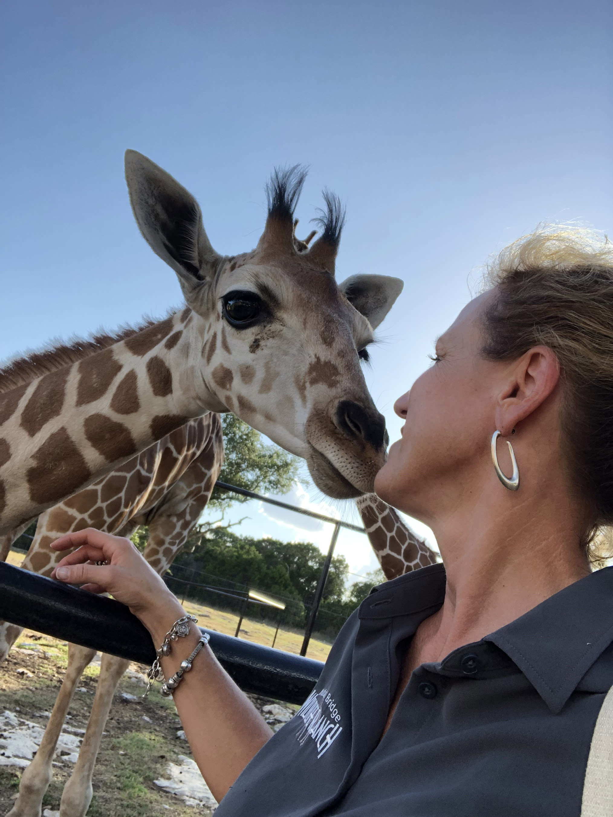 Natural Bridge Wildlife Ranch's successful giraffe breeding spawned rare twin giraffes in 2013. Get up close to the giraffes, and over 500 other animals from 40 exotic, native and endangered species as you drive through their 450-acre ranch.