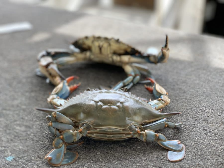 things to do in Biloxi with kids coastal boat tour crabs