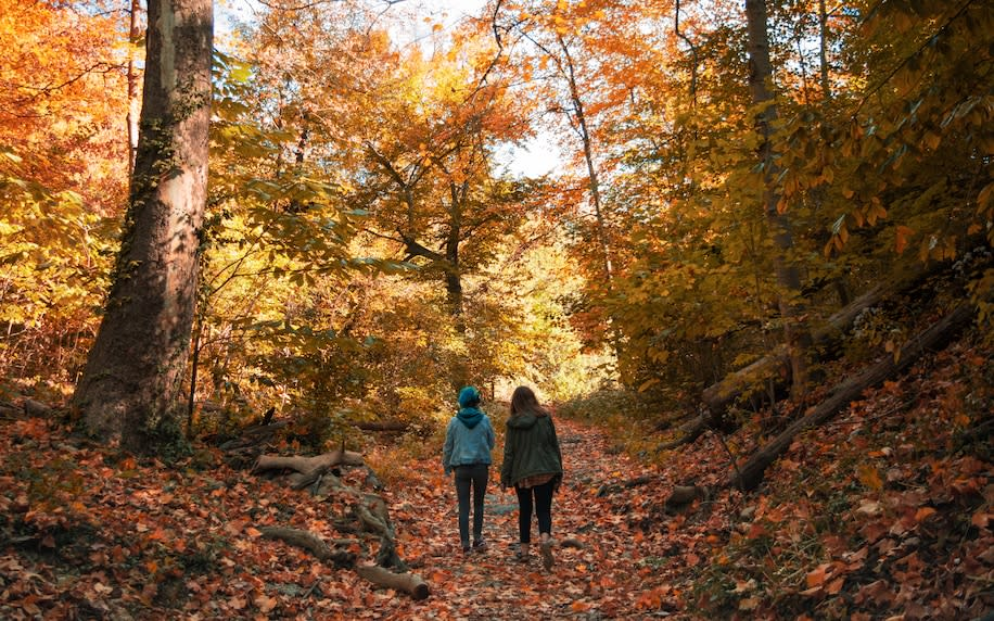 Hikers in Ohio explore Burnet Woods, a 90-acre park near the University of Cincinnati and a top spot for birding and hiking.