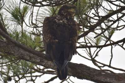FrancisM. Weston Audubon Society Birdwalk