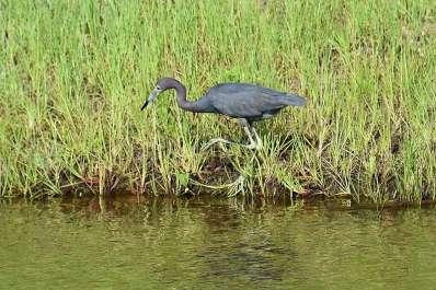 Francis M. Weston Audubon Society Birdwalk At Soundside Foundation Preserve