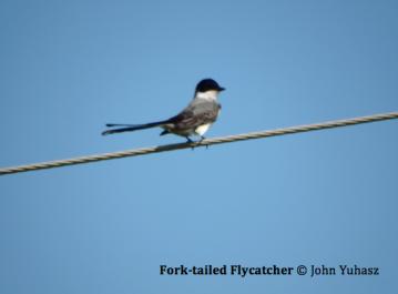 FMW Audubon Birdwalk to Fort Pickens, Gulf Islands National Seashore