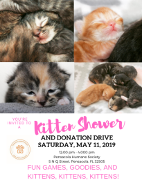 Kitten Shower and Donation Drive