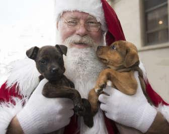 Santa's Puppy Party
