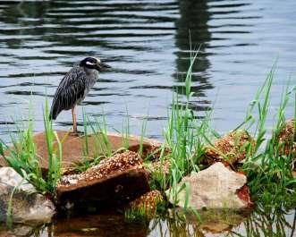 Birdwalk to Big Lagoon State Park