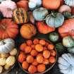 Chubby's Pumpkin Festival