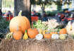 Fall Festival at Our Chesapeake Pumpkin Patch