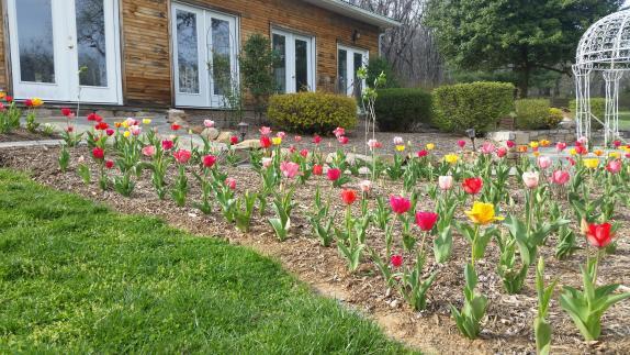 Springtime Tulips at Stone Manor's Solarium Reception Hall