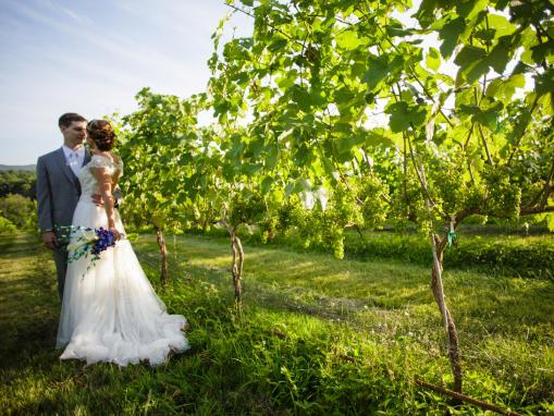 Vineyard Wedding Shot