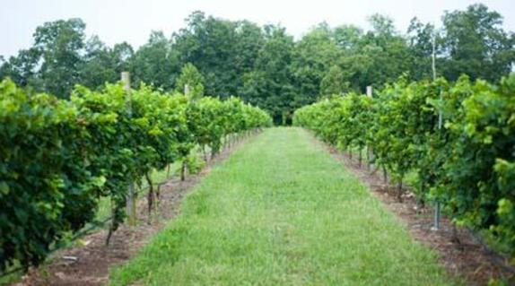 35777_5130_LCW wines.jpg