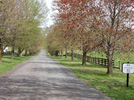 DRIVEWAY AT THE MANOR
