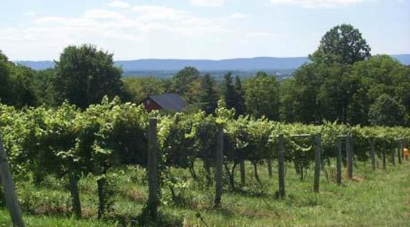 44275_5062_Willowcroft Farm Vineyards.JPG