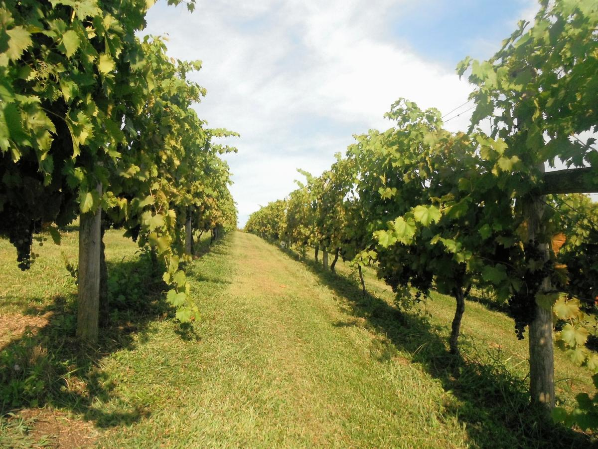 Pinnacle Ridge Winery Kutztown Pa 19530